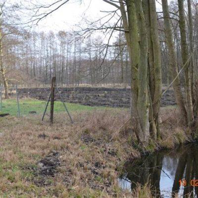 Ein Waldstück für Laubwaldaufforstung