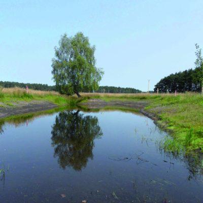 Laichgewässer im Grünen