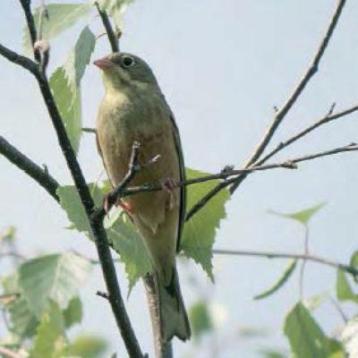 Vogel der auf einem Ast sitzt
