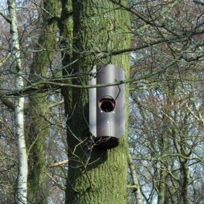Waldkautkasten am Baum
