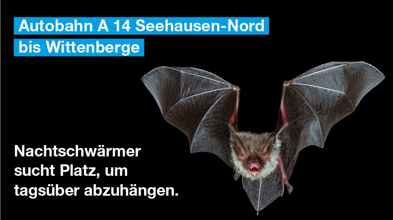 Fledermäuse sind nachtaktiv. Für einen gesunden Tagschlaf bevorzugen sie dunkle und geschützte Quartiere