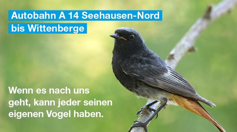 Der Hausrotschwanz ist ein Singvogel, der vor allem morgens, teilweise aber auch ganztägig sein Lied erklingen lässt